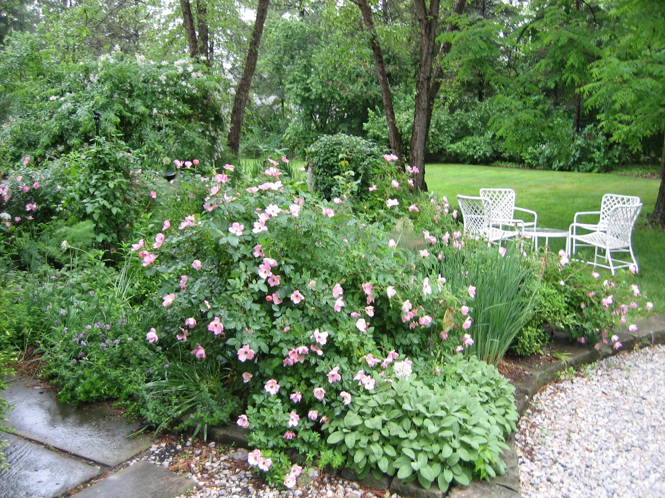 Enchanted Garden: You Are Entering My Enchanted Garden