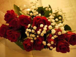 red_valentine__s_roses_by_semiretiredjedi-d4pkzv2 flowers