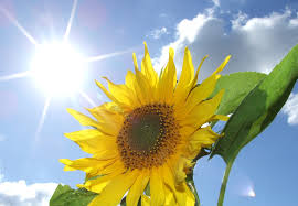 images (3) sun